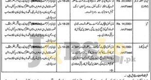 Primary & Secondary Healthcare Dpt Jobs