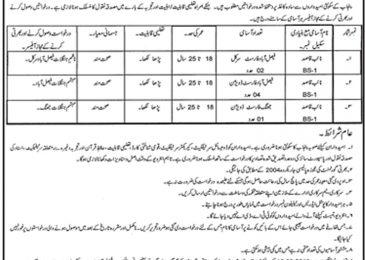 Forest Department Punjab Jobs 2018 Faisalabad For Naib Qasid